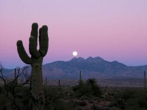 Sonoran Moonrise