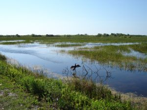 The Florida Everglades
