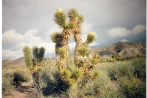 The wilds of eastern Nevada