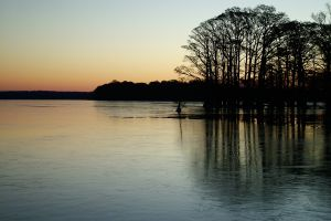 Reelfoot Lake, Tennessee