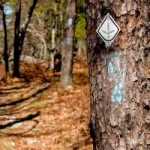 Pinhoti Trail Marker at Talladega National Forest