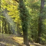 Forest of the French Dordogne